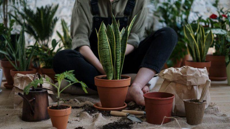 copywriter rośliny